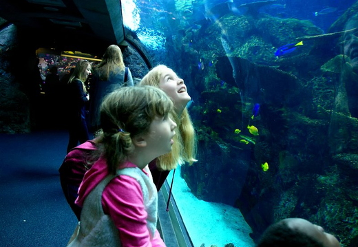 long beach aquarium
