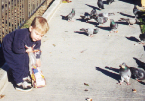 jj feeding birds